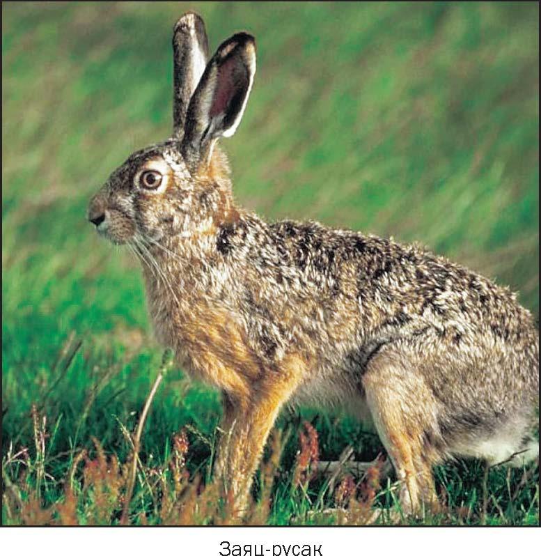 Заяц кролики Картинки фото видео