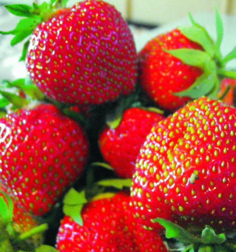Лосинах казашки эротическая клубничка ягода фото пар тулы номерами